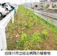 旧掛川市総合病院植樹地IMG_6753hp.jpg